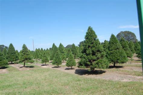photos for old time christmas tree farm yelp