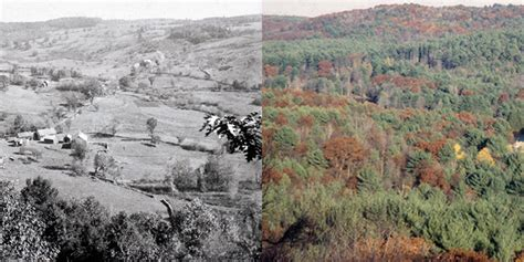 Northeastern Us Forest Transformation  Business Insider