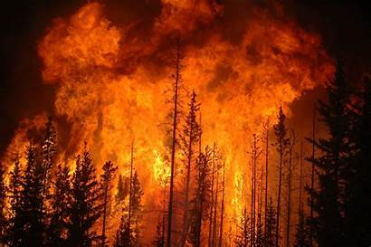 Fire Forest Purple