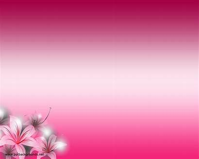 Flower Powerpoint Pink Backgrounds Background Ppt Flowers