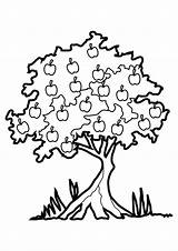 Coloring Fall Pages Trees Clipart Tree Leaves Printable Advertisement sketch template