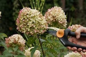 Wann Schneide Ich Hortensien : hortensien schneiden herbst hortensien schneiden im herbst das sollten sie beachten hortensien ~ Frokenaadalensverden.com Haus und Dekorationen