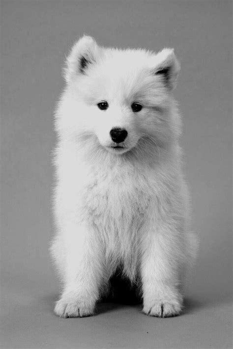 Sweet Polar Bear 😍 Cutestpuppyever Dogs And Puppies