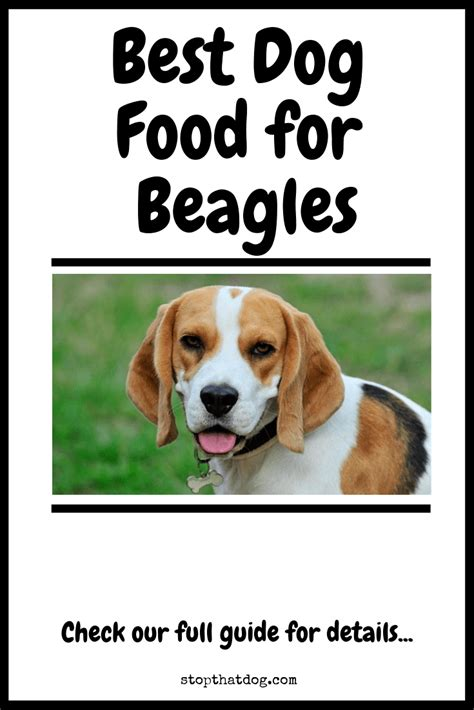 dog food  beagles  ultimate guide stop