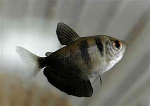 What kinda fish Aquarium Advice Aquarium Forum munity