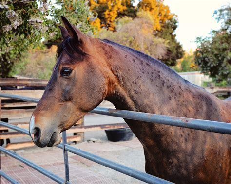 hives horses horse equine testing allergy smartpak advances symptoms animal signs