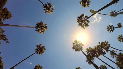 palm tree l pov driving sunshine climate tropical palm trees los angeles beverly hills stock video footage