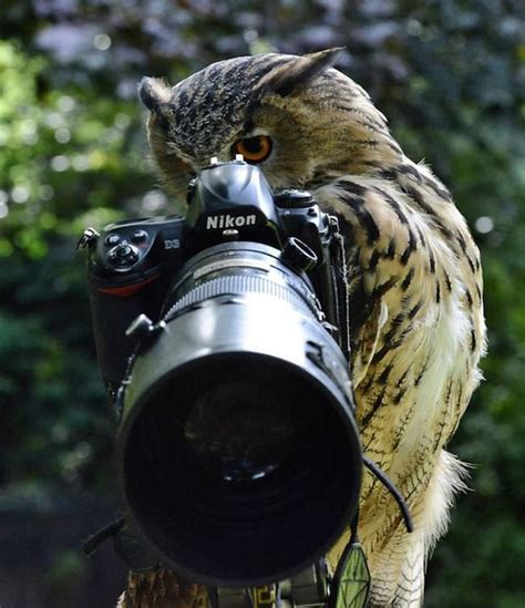 animals      pictures  cameras