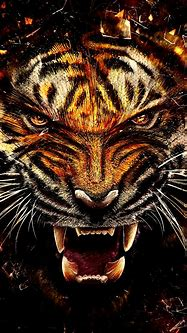 Wild Tiger HD Wallpaper For Your Mobile Phone ...1128