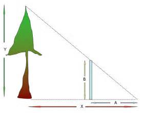 tattoos designs estimating tree height