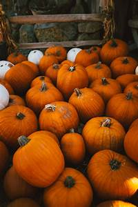 Where, To, Find, All, Kinds, Of, Pumpkins, On, Cape, Cod