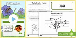 Ks2 Pollination Lesson Teaching Pack