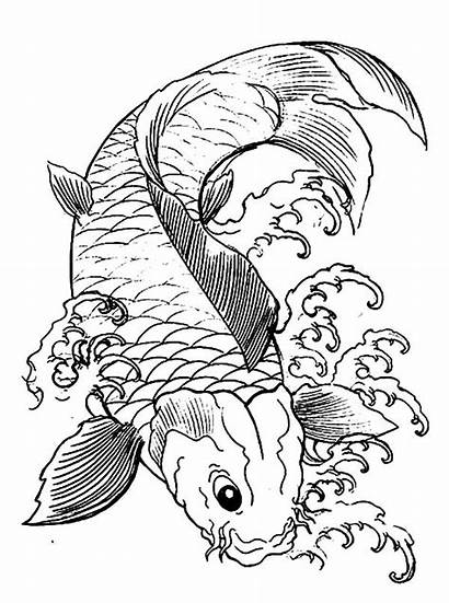 Koi Coloring Fish Pages Japanese Drawing Adults