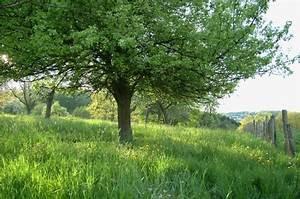 Bäume Verschneiden Obstbäume : baumpflege obstbaeume verschneiden arbeiten im garten ~ Lizthompson.info Haus und Dekorationen