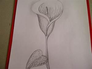 Bilder Zeichnen Für Anfänger : zeichnen lernen marienkaefer insekt anfaenger kreis punkte einfache verwandt mit bilder zum ~ Frokenaadalensverden.com Haus und Dekorationen