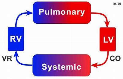 Venous Return Cardiac Hemodynamics Function Blood Heart