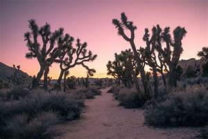 The Family Guide To Exploring Joshua Tree National Park
