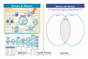 Newpath Learning Mitosis And Meiosis Visual Learning Guide