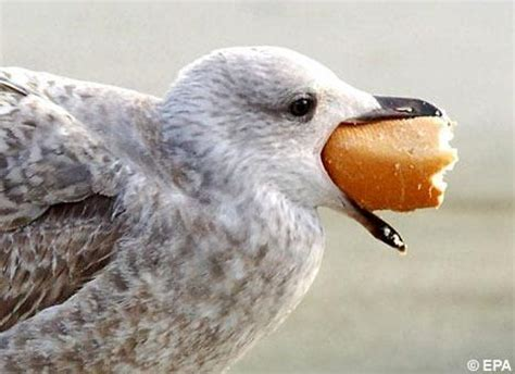 funny seagull new photos 2011 funny and cute animals