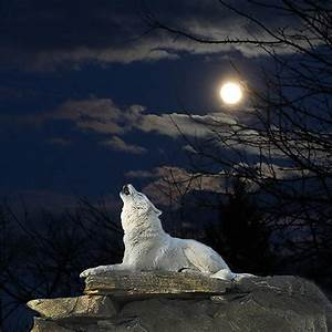 White Wolf Howling At The Moon Digital Art by Imageries ...