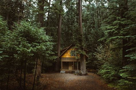 forest nature cabin wallpapers hd desktop  mobile