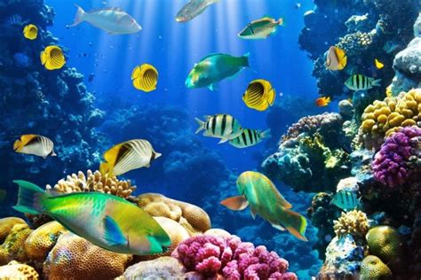 jenis ikan hias air laut cantik animal