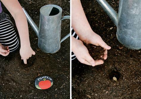 planting pumpkin seeds plant ahead paging supermom