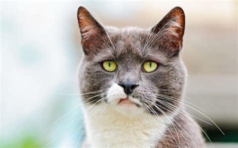 bipolar true false cat sad