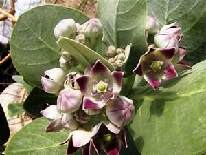Pflege Von Zimmerpflanzen : der wachstumszyklus pflege von zimmerpflanzen zimmerpflanzen zimmer und gartenblumen ~ Markanthonyermac.com Haus und Dekorationen
