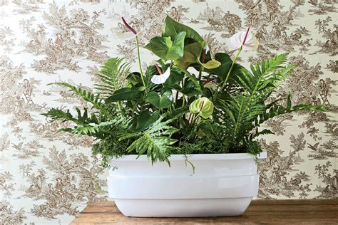 Rely On Leaves  Indoor Container Garden Ideas Southern