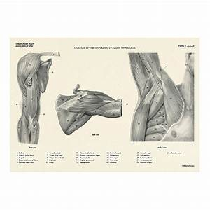 Manual Human Anatomy