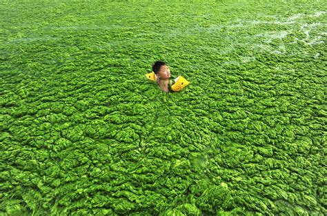 pictures extreme algae blooms expanding worldwide