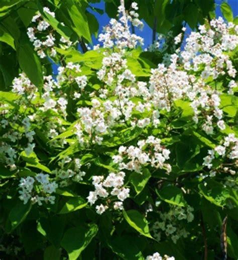 large flowering trees large flowering trees mike s garden top 5 plants