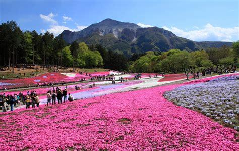 Top 6 Flower Spots in Saitama
