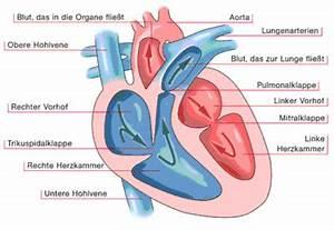 Das Herz Des Waldes : leben mit transplantation wartezeit organe und erkrankungen herz astellas pharma gmbh ~ Yasmunasinghe.com Haus und Dekorationen