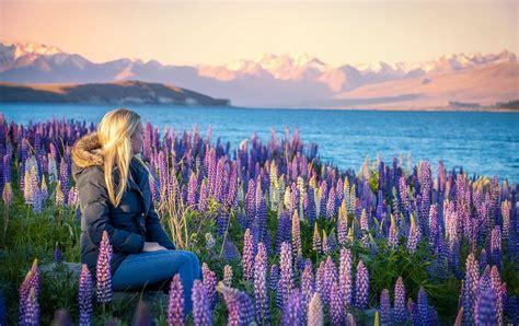 Lupin Flowers In The Mackenzie Mackenzie Region
