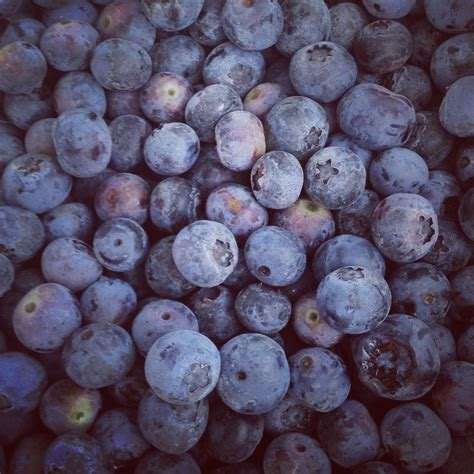 what color are blueberries blueberries get their color from antioxidant