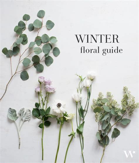 winter flowers ideas  pinterest burgundy