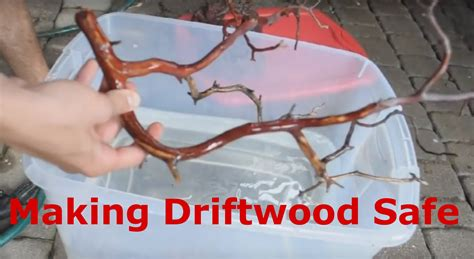 things out of driftwood making rocks and driftwood aquarium safe youtube