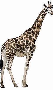 Collection of PNG HD Images Of Animals. | PlusPNG