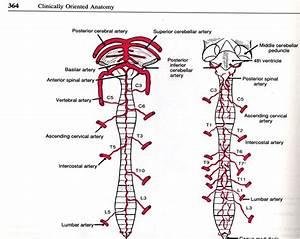 Healthy Ranula  Central Nervous System Cns