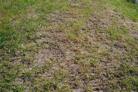Wie Oft Rasen Vertikutieren by Rasen Vertikutieren Zeitpunkt Richtig W 228 Hlen