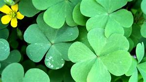 St. Patricks Day - Dr. Odd