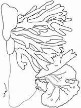 Seaweed Coloring Colors Printable Bright Choose Favorite sketch template