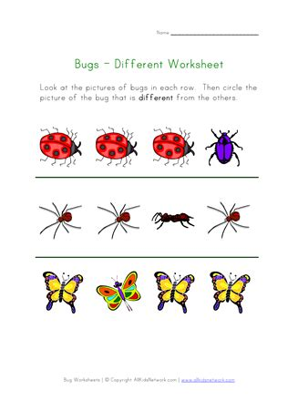 bugs worksheet recognize  insects  images