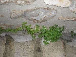 Desherbant Mauvaise Herbe : d sherbant naturel et gratuit ~ Premium-room.com Idées de Décoration