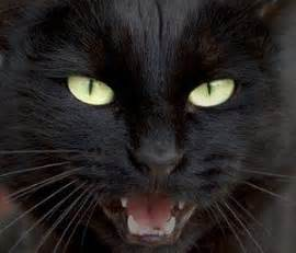 cat meow sound cat meow sounds