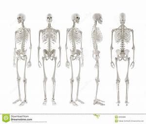 Skeleton Turnaround Royalty Free Stock Images