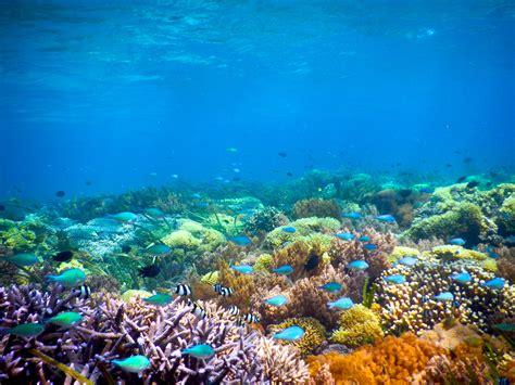 gambar wallpaper alam bawah laut gudang wallpaper