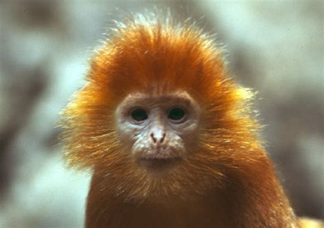 cute monkey pictures cute baby monkeys tedlillyfanclub